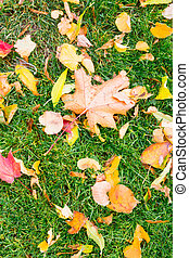 Yellow and red leaves on green grass in autumn