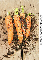 Carrots and soil on wood - Fresh carrots and soil on old...