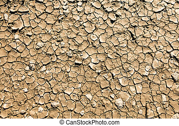 dry, cracked mud