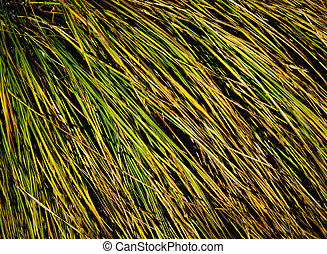clump of grass texture - abstract background or texture...