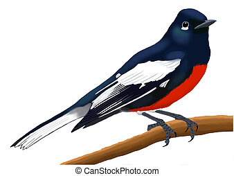Painted Redstart adult - Painted Redstart - Myioborus pictus...