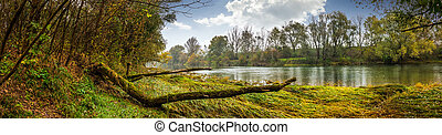 mountain river with fallen tree on the shore - mountain...