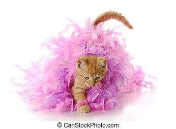 kitten playing - nine week old kitten playing in pink...