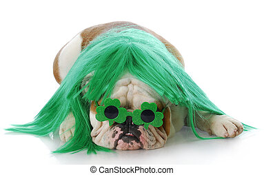 St Patricks day dog - english bulldog dressed up with green...