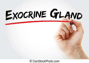 Hand writing Exocrine gland with marker, concept background