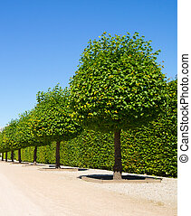 Decorative round trees - Round shaped green trees on...