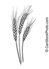 Hand drawn vector illustration of wheat. Isolated on white...