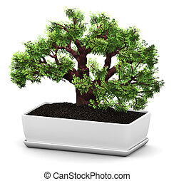 Bonsai Baobab green tree in flower pot - 3D render...