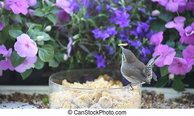 two birds find live food - a wren and a titmouse find worms...