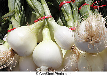 Bulb, white onions with tops. - An outdoor display of many...