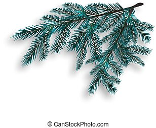 Two blue realistic tree branch. Spruce branches located in the corner. Isolated on white background. Christmas illustration