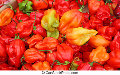 spicy red habanero peppers to food preparation hot spicy