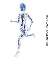 female jogger - 3d rendered illustration of a transparent...