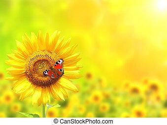 farfalla, girasole, giallo, luminoso, verde, fondo