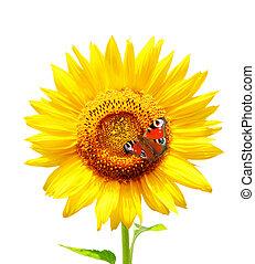 蝴蝶, 明亮, 黃色, 向日葵