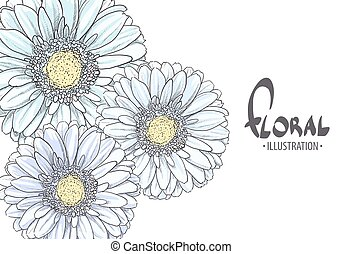 Blue Gerbera on a white background - Bright Blue gerbera on...