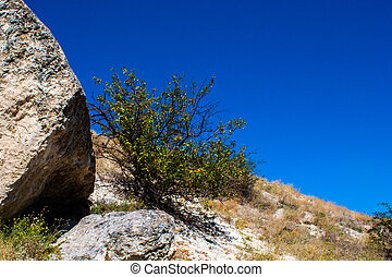 Tree on the steep mountainside