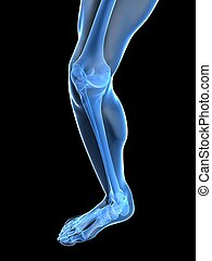 knee illustration - 3d rendered illustration of human leg...