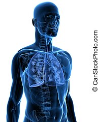 human lung - 3d rendered illustration of a transparency...
