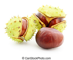 Chestnuts in husk. - Chestnuts in husk isolated on white...