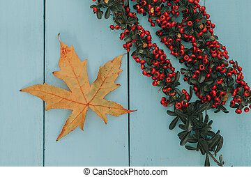 Autumn colors. Fall leaves and a branch with red berries