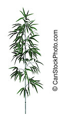 3D Rendering Bamboo Tree on White - 3D rendering of a greeen...