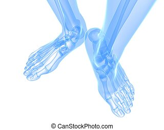 x-ray foot illustration