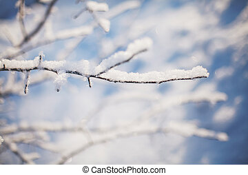 Winter tree branches covered with snow in sun light