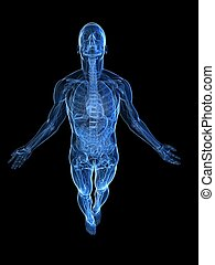 rising body - x-ray - 3d rendered illustration of a...