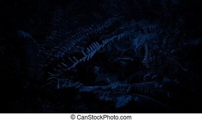 Moving Under Ferns At Night - Passing slowly under ferns in...