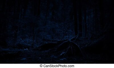 Moving Past Large Tree Roots At Night - Dolly shot slowly...