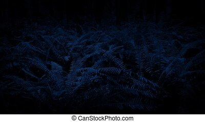 Moving Past Ferns At Night - Dolly shot slowly moving past...