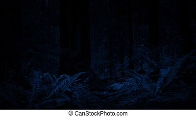 Moving Through Forest At Night