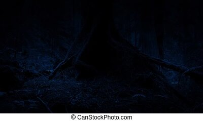 Passing Tree Roots In The Woods At Night - Dolly shot slowly...