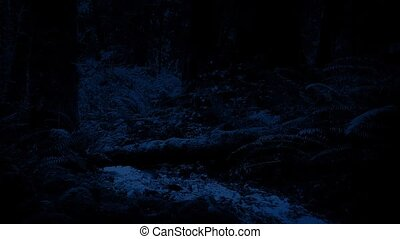 River Deep In The Woods At Night - River flowing through...