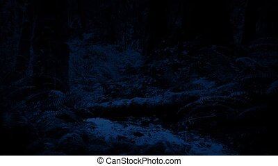 Moving Past Forest River At Night - Dolly shot moving past a...