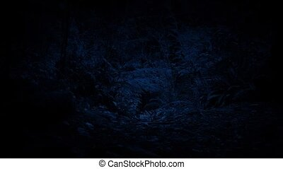 Moving Along Forest Path At Night - Dolly shot slowly moving...