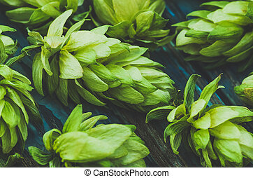 hops, closeup, agricultural background, Blue toned - Green...
