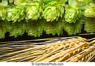 Green hop cones and ears of wheat. agricultural - Green hop...