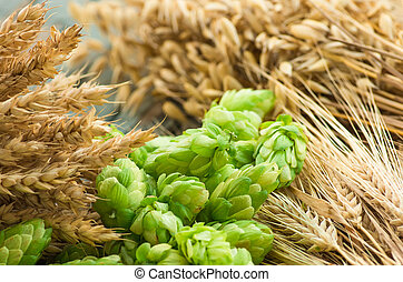 Green hops, malt, ears of barley and wheat, ingredients to...