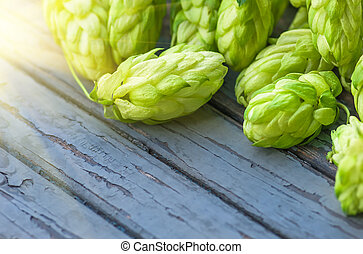 Green hops, agricultural background - Green hop cones lying...