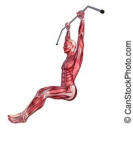 male workout - hanging leg raises - 3d rendered anatomy...