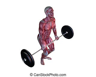 male workout - deadlifts - 3d rendered anatomy illustration...