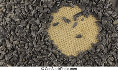 Falling sunflower seeds on the rotating circle of sunflower...