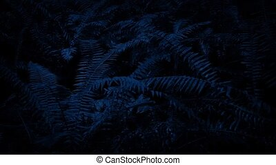 Moving Past Ferns In The Dark - Dolly shot slowly moving...