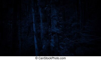 Passing Mossy Forest Trees At Night - Moving past...