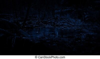 Rain Hitting Pool In The Forest At Night - Woodland pool in...