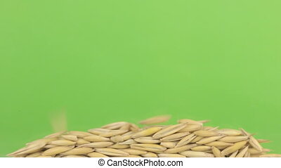 Falling grains of oat on a pile of oat on a green screen. -...