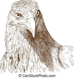 engraving illustration of big eagle head - Vector antique...