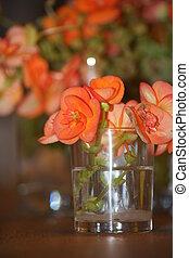 Elegant orange Begonias - Beautiful vibrant orange begonias...